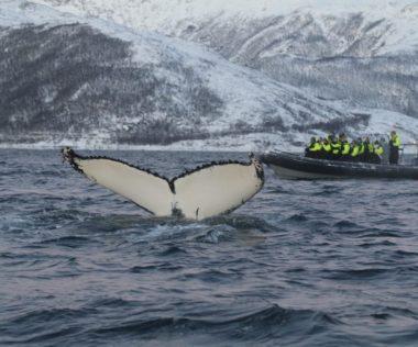 Különleges ajánlat: egy hét Tromsø 96.700 Ft-ért szállással és repülővel!