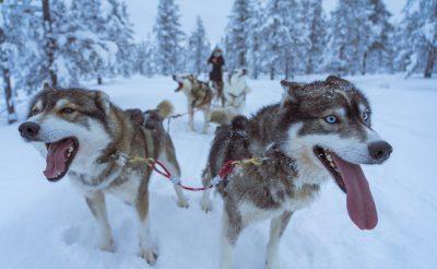 Egy hét Lillehammer 92.480 Ft-ért! Négy csillagos hotel! Síparadicsom, husky szánozás, jéghotel látogatási lehetőség!