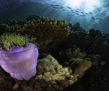 500 méter magas korallzátonyt fedeztek fel a Nagy-korallzátonyon