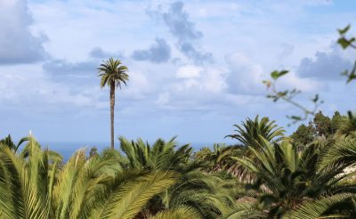 Már gyorsteszttel is utazhatunk a Kanári-szigetekre