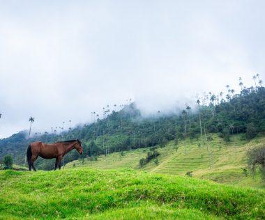 10 napos kirándulás Kolumbiában szállással és repülővel 227.025 Ft-ért!