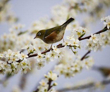 Végre itt a tavasz! – ezek a tavaszi arborétumok és kertek várnak