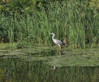 5 ok, amiért a Tisza tó sokkal több, mint gondolnád!
