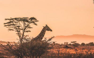 Az Emirates utasai nagyobb poggyásszal utazhatnak Afrikába