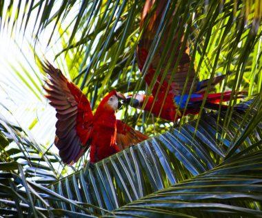 Természetszeretők figyelem: 10 napos felejthetetlen utazás Costa Rica-ra 229.400 Ft-ért!