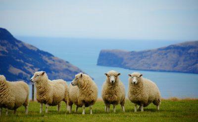 Miért éppen Új-Zéland? Már csak 2 nap a jelentkezésig!