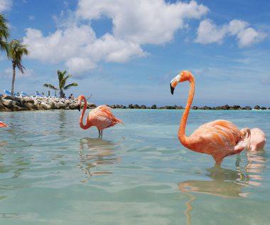 Álomutazás: 10 nap Aruba szállással és repülővel 231.940 Ft-ért!