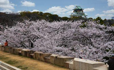 Japán a cseresznyefa virágzás idején! 10 nap, Oszaka, négycsillagos szállással és repjeggyel: 245.500 Ft-ért!