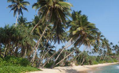 1 hét Srí Lankán ötcsillagos óceánparti hotelben Emirates repjeggyel 266.000 Ft-ért!