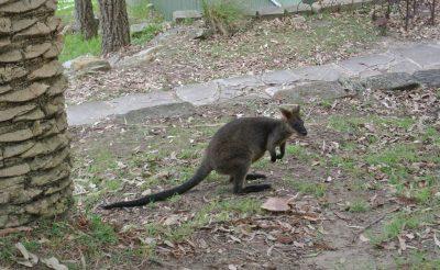 81-94. nap 1. rész: Vajon hogy nem megy rá majd a gatyám Ausztráliára?